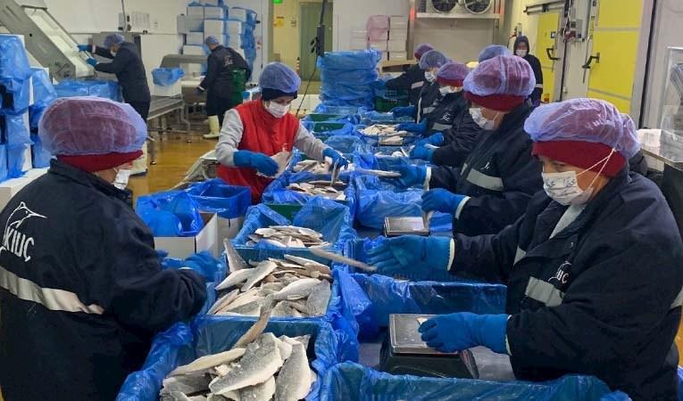 Kültür balıkçılığında ihracat hedefi 2 milyar dolar